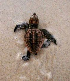 To the sea! So cute!!!