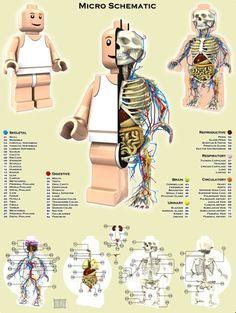anatomy of a Lego