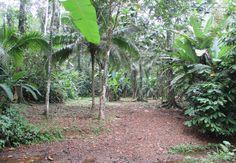 Objektbeschreibung:  Diese traumhafte Finca mit ca. 2 ha Grund befindet sich in der Nähe des Nationalparks von Cahuita.  Die Finca wird von zwei kleinen und romantischen Flüssen eingesäumt.  Der Preis ist ein absolutes Schnäppchen! Besichtigungstermine gerne nach Absprache.