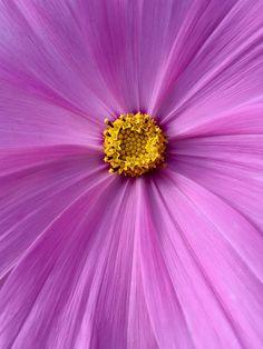 iPhone 6 - Kleurrijke macro van een bloem