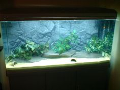 I've got a 48 inch long, 20 inch high, 14 inch deep aquarium. Goldfish Aquarium, Aquascaping, Catfish, Aquariums, Fish Tank, Slate, Emerald, Tropical, Google Search