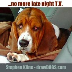 Basset Hound with red eyes.