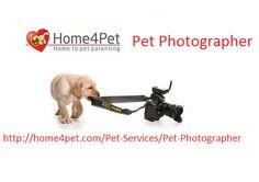 http://home4pet.com/Pet-Services/Pet-Photographer