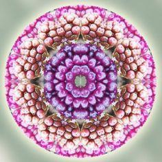 Infinite Life Mandala (Circles of Awareness series) by Sue O'Kieffe, 2009.