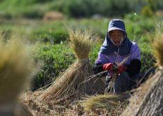 Foro CEPAL: Lo rural no debe ser atraso, sino otra vía de progreso | Planeta Futuro | EL PAÍS The World, Eating Habits, Healthy Eating, Future Tense