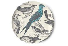 S/4 Thomaspaul Ornithology Dinner Plates