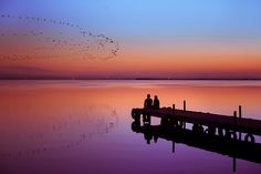 Birds of a feather flock together by Lara Cores, via Flickr