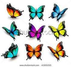 Collection of colorful butterflies, flying in different directions. Collection of colorful butterflies, flying in different directions. Colorful Butterfly Tattoo, Butterfly Sketch, Butterfly Pictures, Butterfly Tattoo Designs, Cartoon Butterfly, Butterfly Colors, Illustration Papillon, Butterfly Illustration, Illustration Vector