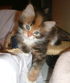 my next kitten :)