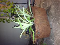 """""""Thepondmonster.com"""". Check us out :-) Pond, Plants, Check, Water Pond, Plant, Garden Ponds, Planets"""