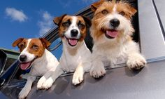 Up to 63% Off Home Dog Boarding
