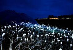 bruce munro, fields of light, ayers rock, uluru, australia green art, eco art, sustainable art, green lighting, led, led lighting, light emitting diodes, led flowers, sustainable design, green design