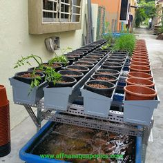 Affnan's Aquaponics: Backlane Gutterbeds - Planting Simple