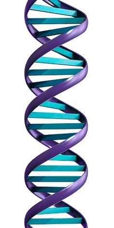 DNA molecule, resembling long twisted ladder with rungs