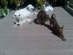 The fab 5 Hughes Dogs in the Sun