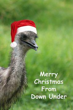 Merry Xmas   von aussiegall