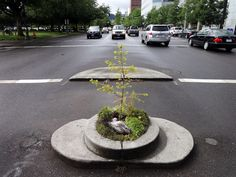 Portland Oregon is home to the world's smallest park, Mill Ends Park, which totals 452 inches. It was created in 1947 as a colony for leprechauns.
