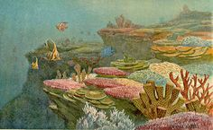 rhamphotheca:  Ancient Coral Reefs (ca. 1920) by Heinrich...