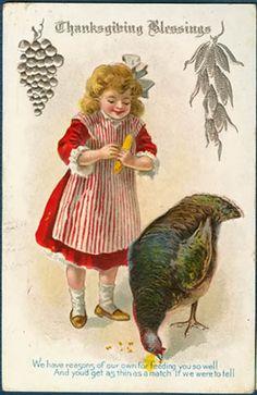 Thanksgiving Pretty Little Girl Feeds Corn To A Turkey