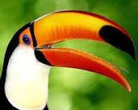 Resultado de imagem para floresta amazonica