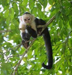 Twigs and monkeys