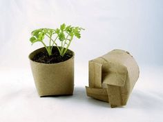 Seedling in a toilet paper roll repurposed as a mini planting pot