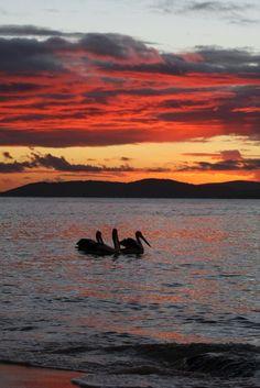 port Stephens Australia Where To Go, Dolphins, Whale, Wildlife, England, Australia, London, Sunset, Country
