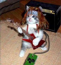 Heavy Metal Kitteh