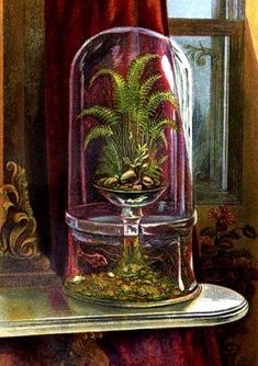 "Combination of aquarium and wardian case. _ Antique Aquarium from ""Hints for the Formation of a Fresh-Water Aquarium,"" Victorian Conservatory, Victorian Greenhouses, Victorian Homes, Victorian Era, Victorian Design, Best Greenhouse, Greenhouse Plans, Freshwater Aquarium, Aquarium Fish"
