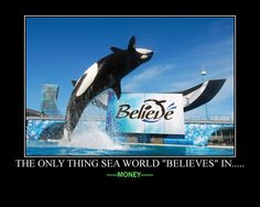 "The only thing Sea World ""Believe's"" in.....MONEY!!!"
