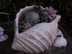 Shell Planter = Perfect for a beach-house, indoors or out
