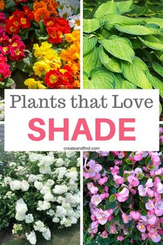 Best Plants that Grow in Shade Plants that you need for those shady areas of your yard or garden - 10 gorgeous shade loving plants!Plants that you need for those shady areas of your yard or garden - 10 gorgeous shade loving plants! Plants That Love Shade, Shade Loving Shrubs, Shade Garden Plants, Garden Shrubs, Cool Plants, Lawn And Garden, Flowering Plants, Shade Loving Flowers, Annual Shade Flowers
