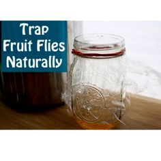 how to get rid of fruit flies in the house simple fruit salad