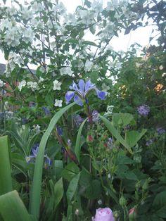 Dublin, Gardens, Plants, Outdoor Gardens, Plant, Garden, House Gardens, Planets