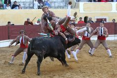 Forcados - Aposento da Chamusca - Portugal http://tourada-portugal.blogspot.pt/