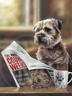 Terrier Mix Border Terrier Limited Edition Print The Countryman by Paul Doyle Border Terrier Puppy, Bull Terrier Dog, Terrier Mix, Terriers, Terrier Puppies, Cute Puppies, Cute Dogs, Dogs And Puppies, Doggies