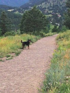 The award-winning dog park in Evergreen, Colorado: Just go