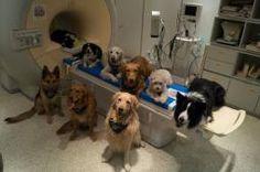 #Internacionales Capacidad neuronal permite a perros procesar lenguaje. http://noticiasdechiapas.com.mx/nota.php?id=88659 …
