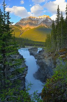 Circuit au Canada. Les chutes d'Athabasca.