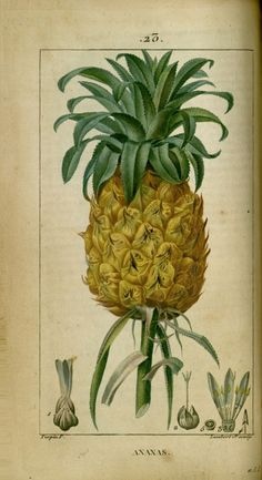 Dessins anciens de plantes médicinales Flore médicale illustrée par des gravures…