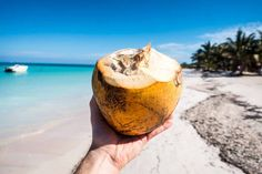 [PREMIUM] Young coconut at a beach - FoodiesFeed