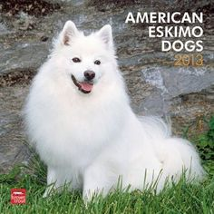 (12x12) American Eskimo Dogs - 2013 Wall Calendar