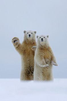 High five from polar bear!