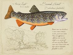 Brook Trout- 9x12 inch limited edition print by Matt Patterson, trout print, fishing for brook trout, cabin decor