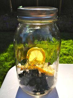 lemon blackberry blueberry fruit infused water