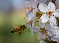 A bee doing work!