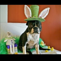 It's the Easter Gunny!