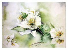 Jasminblüte