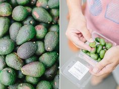 avocados & mini kiwis from carmenandingoblog - A country to fall in love with | New Zealand