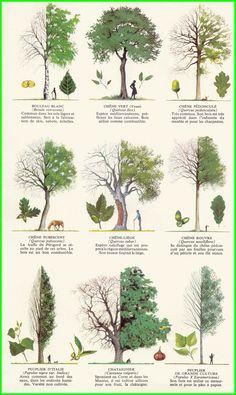 árboles y plantas Nail Desing 5 easy nail art designs Landscape Drawings, Landscape Design, Garden Design, Trees And Shrubs, Trees To Plant, Baumgarten, Tree Identification, Illustration Botanique, Tree Leaves